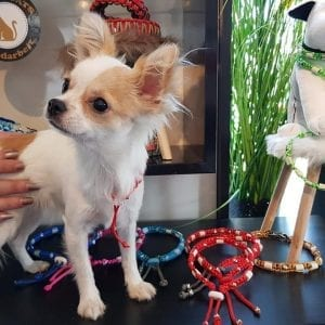 EM Keramik-Halsband Präsentation mit Bella
