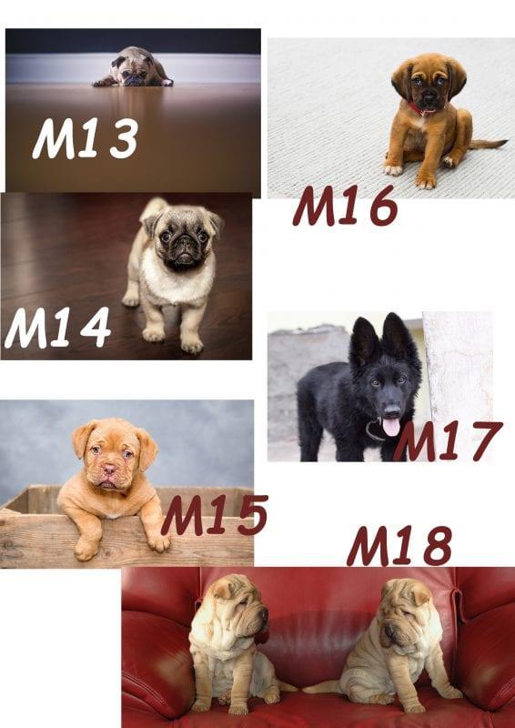 Motiv Hund 13-18