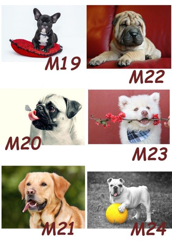Motiv Hund 19-24
