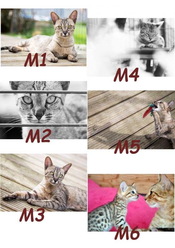Motiv Katze 1-6