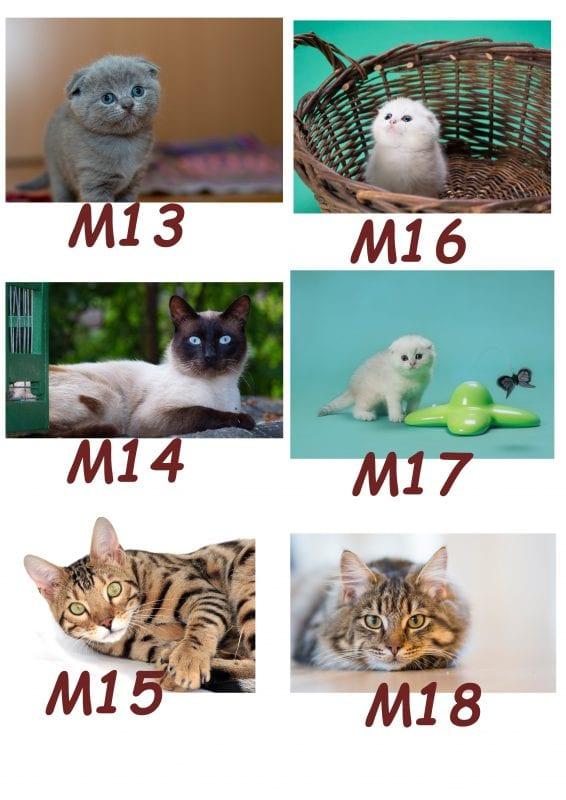 Motiv Katze 13-18