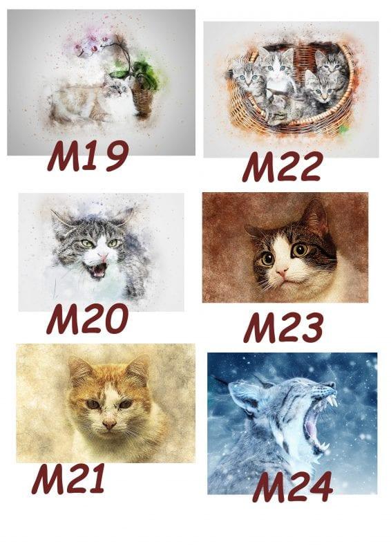 Motiv Katze 19-24