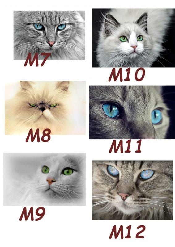 Motiv Katze 7-12