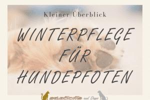 Titel - Infografik Winterpflege für Hundepfoten